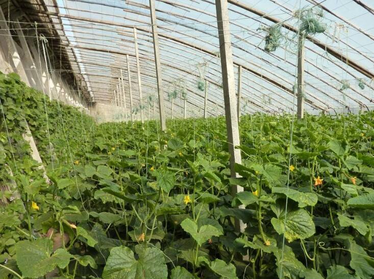 成都台蓉农业科技有限公司合作博优种子二维码系统